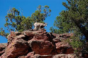 You'll spot the occasional Mountain Goat!